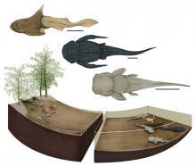 Reconstructie van de paaiplaats: jonge placodermen in het ondiep (bovenaan), volwassen dieren in diepere wateren (beneden). (Beeld: Justine Jacquot-Hameon, MNHN)