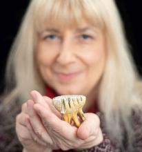 Palaeontologist Mietje Germonpré holding a tooth of a mammoth calf found at Goyet Cave. (Photo: Thierry Hubin, RBINS)