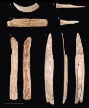 Dierenbotten uit het neolithische graf in Abri des Autours. B: een priem gemaakt uit een middenvoetsbeentje van een schaap of geit. C, E: stangen uit edelhertgewei. F: gepunte ribben van mogelijk een rund. A, D: onbewerkte botten. (Foto: KBIN)