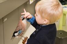 Een peuter observeert een vogel tijdens een Atelier voor de Allerkleinsten (foto: Thierry Hubin / KBIN)