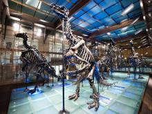 dinosaur's gallery