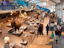 De Galerij van de Evolutie met actuele en fossiele soorten (foto: Thierry Hubin / KBIN)