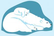 Une maman ours polaire et ses deux oursons dorment à l'abri du froid (dessin : Claude Desmedt, IRSNB)