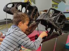 Un jeune visiteur replace les dents d'un sauropode (photo : IRSNB)