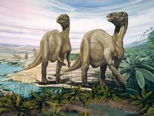 Iguanodon bernissartensis