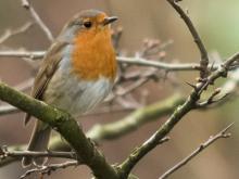 Atelier café : les oiseaux