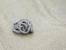 Tortillon de sable laissé par une arénicole sur une plage humide (photo : Thierry Hubin, IRSNB)