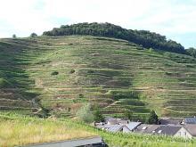 Le Kaiserstuhl, ancienne île-colline, d'origine volcanique, surplombant le Rhin (photo : Jean-Michel Bragard / IRSNB)