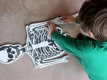 Un enfant reconstitue un puzzle en mousse représentant un squelette humain à sa taille (photo : Coralie Boeykens / IRSNB)