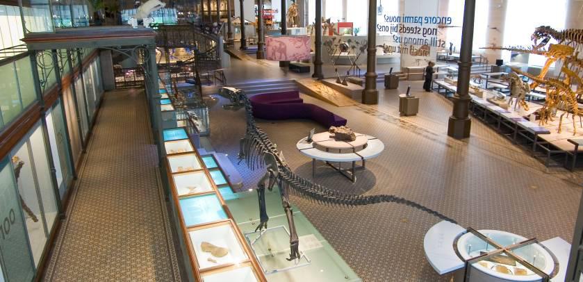 Galerij van de Dinosauriërs