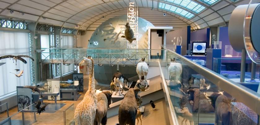 Gallery of Evolution