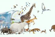 Banner Living Planet