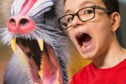 Mandril en jongen in de tentoonstelling APENSTREKEN