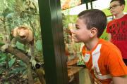 Un enfant nez à nez avec les singes