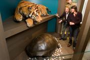 Tijger en schildpad CITES