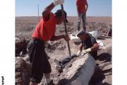 Opgravingen (Mongolië 2001)
