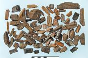 Fragments de bois dans les déchets moyenâgeux de la place Émile Braun à Gand (photo : Koen Deforce, IRSNB)