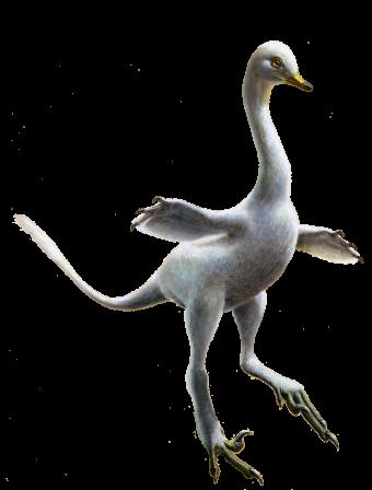 Artistieke impressie van Halszkaraptor escuilliei (Beeld: Lukas Panzarin)