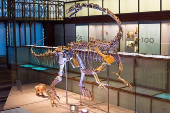 Plateosaurus Ben
