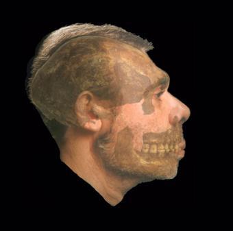 Reconstruction du profil de l'Homme de Spy (Photo : IRSNB)