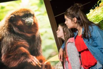 Deux amies devant une photo de singe