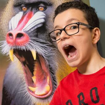 Jeune imitant l'expression d'un mandrill gueule ouverte dans l'exposition LES SINGES