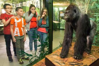 Gorilla  and young visitors in the exhibition MONKEYS