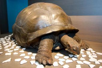 Schildpad CITES