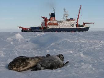 Antarctica - Research ship Polastern