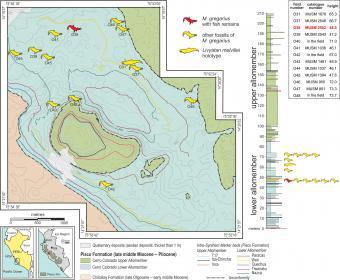 Kaart van de vindplaats in de Pisco-Ica-woestijn in Zuid-Peru, met intussen twaalf skeletten van de uitgestorven spitssnuitdolfijn Messapicetus gregarius. (illustratie: G. Bianucci)