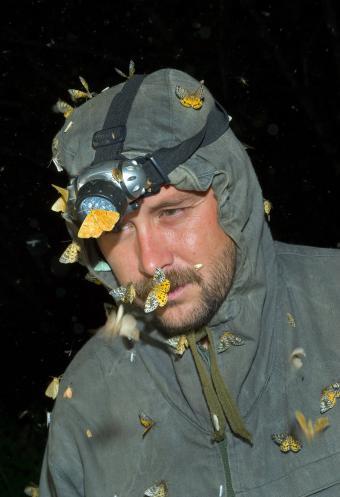 Entomologiste couvert d'insectes volants
