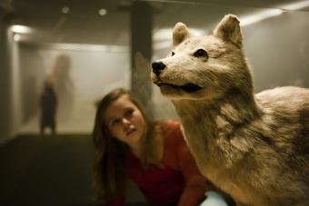 Domestication du loup