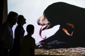visitors looking at the picture of a bear with a very long tongue © KBIN / IRSNB / RBINS