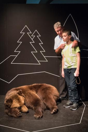 visitors in front of a sleeping bear © KBIN / IRSNB / RBINS